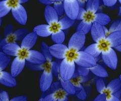 5_Wildflowers_1084thumb