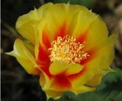 yellowredflower384x348